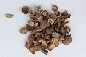 Beleric Extract