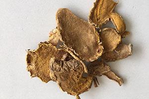 Wild Turmeric Extract